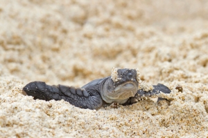 hatchling photo