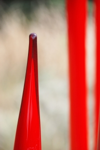 red_reeds
